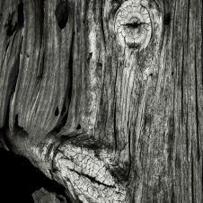 Accidental-Art---Weeping-Willow-Copyright-Michael-Attrill
