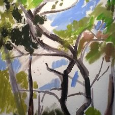 Trees-in-Provence