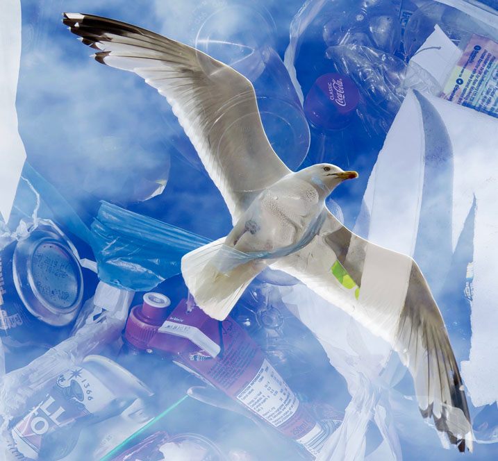 From Plastication Imagination, a free photography exhibition on Hastings and St Leonards seafront  September 2018, part of Coastal Currents and Photo Hastings festivals, exploring the impact of plastic pollution.